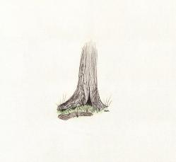 stump_drawing